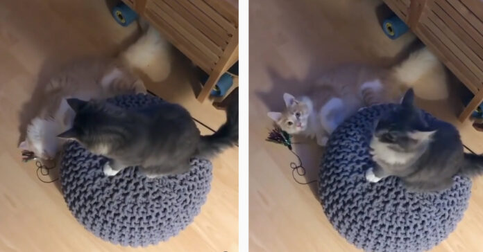 Gattini che giocano