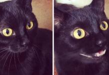 Gattino nero che miagola