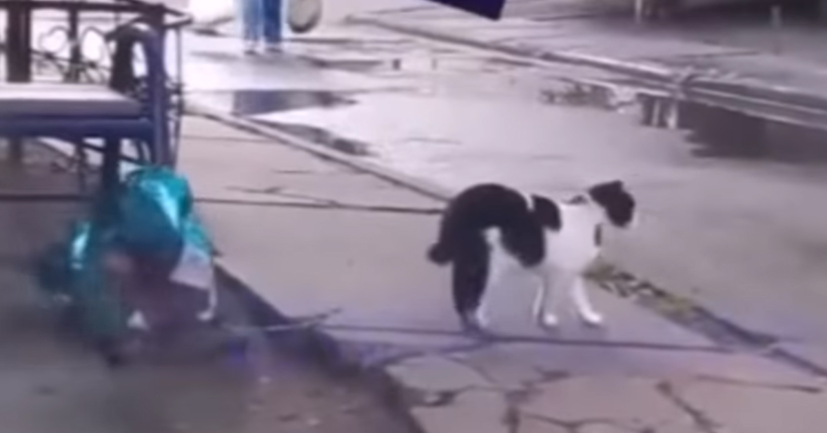 Gatto con un palloncino