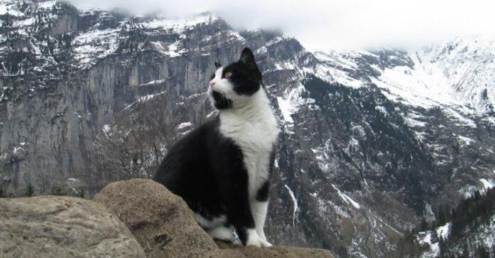Gatto in montagna