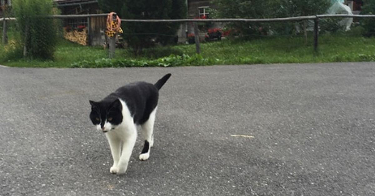 Gatto che cammina in strada