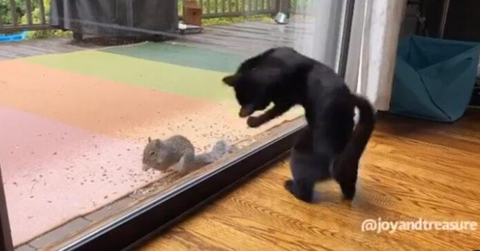Gattino gioca con uno scoiattolo