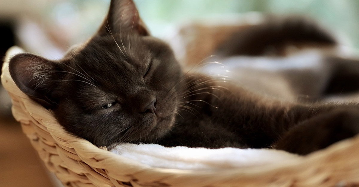 Gattino che dorme in una cuccia