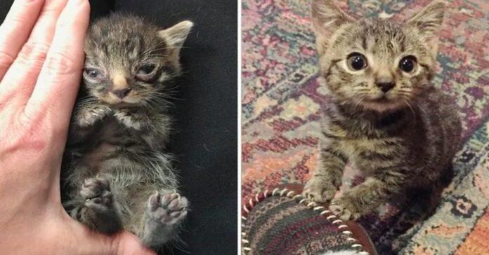 gattino salvato