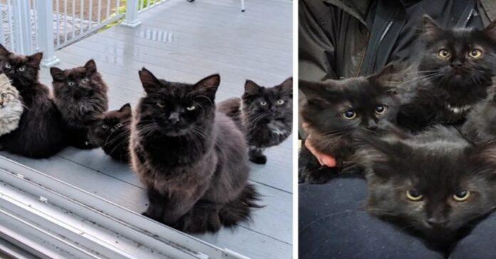 mamma gatta con i cuccioli