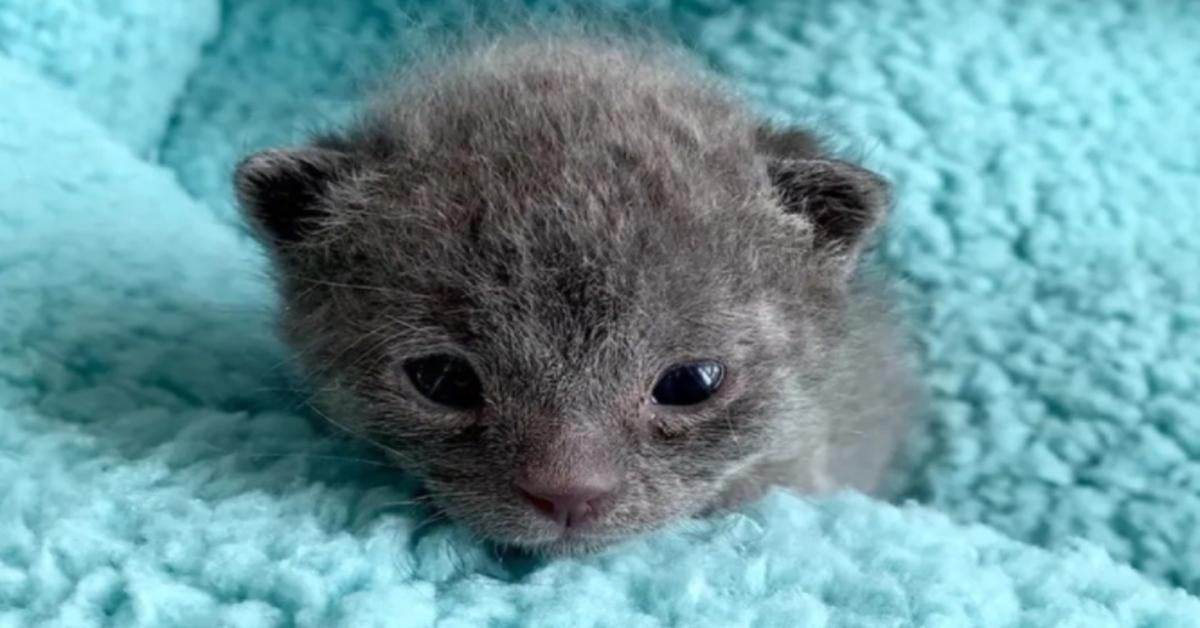 gattino piccolo che osserva