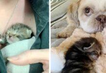 gattina dorme vicino a un cagnolino