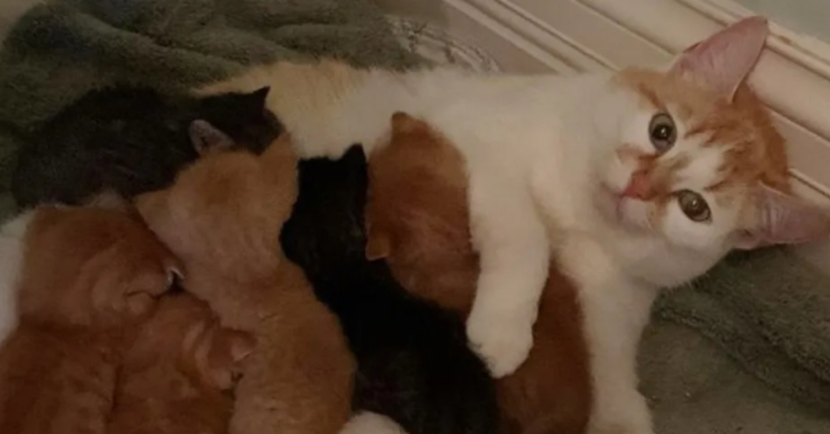 gatta con cuccioli