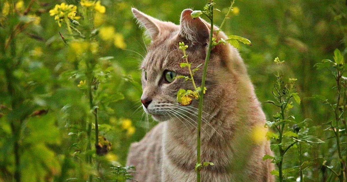 Gatto tra la vegetazione