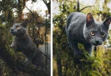Gatto escursionista