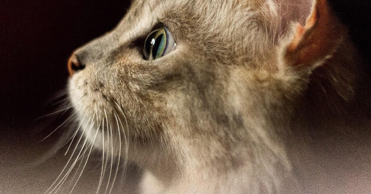 gatto catturato da qualcosa