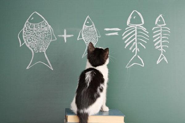 gattino davanti a lavagna