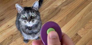 addestrare un gatto in casa