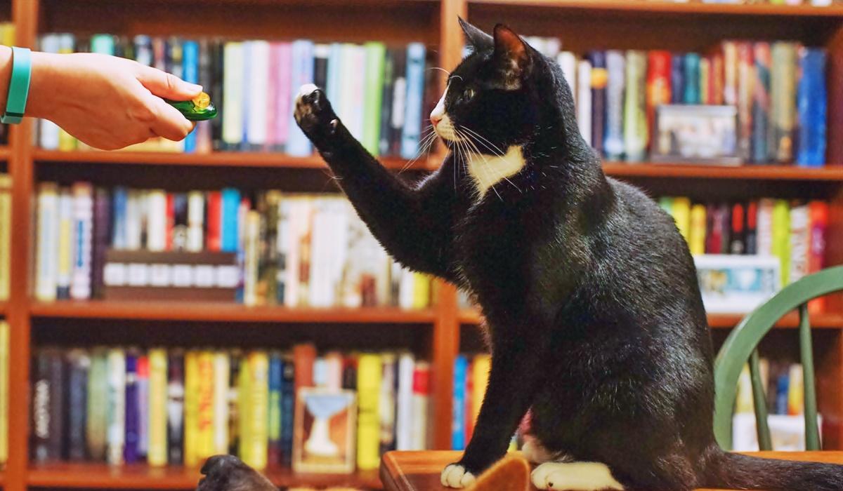 clicker per gatti