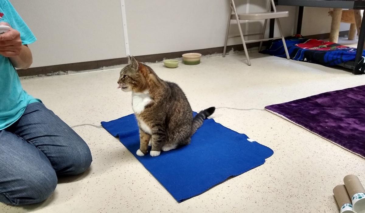 gatto seduto su un tappetino