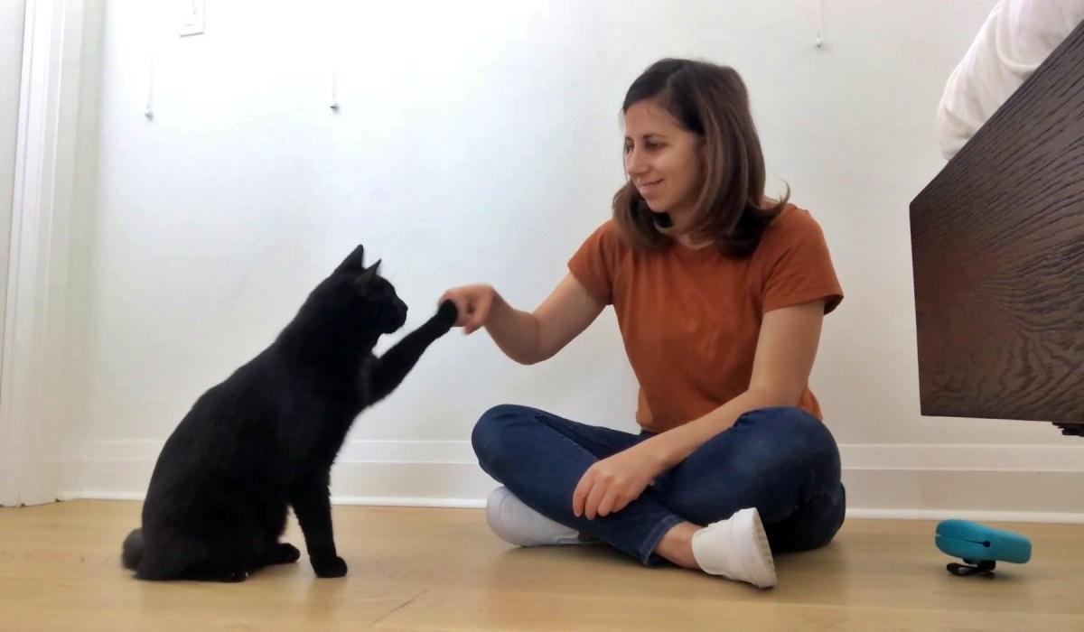 gatto dà la zampa alla padrona