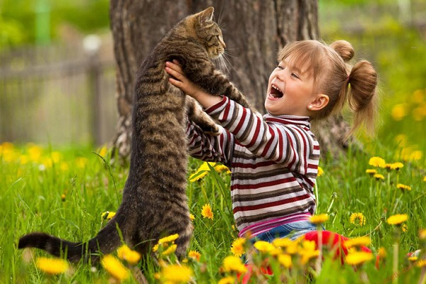 gatto e bimba in un campo