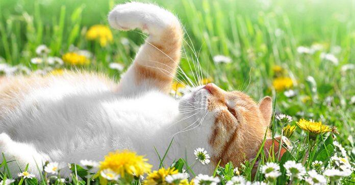 gatto tra le margherite