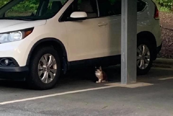 amber gattina trovata parcheggio