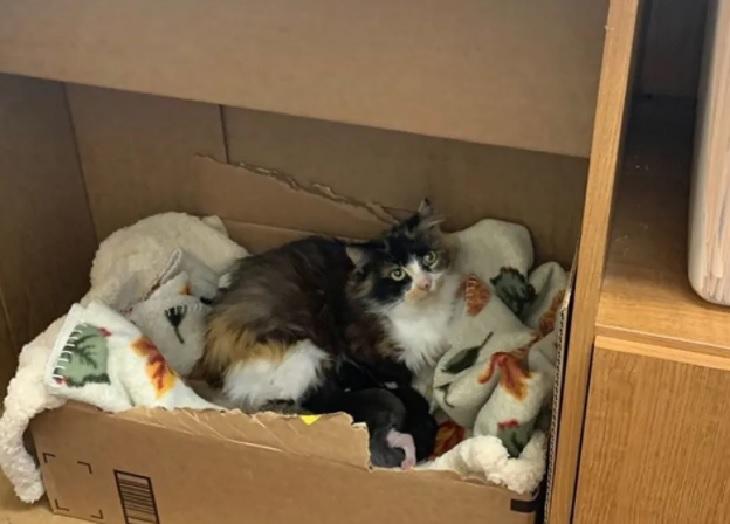 amber gatta salvataggio soccorritori
