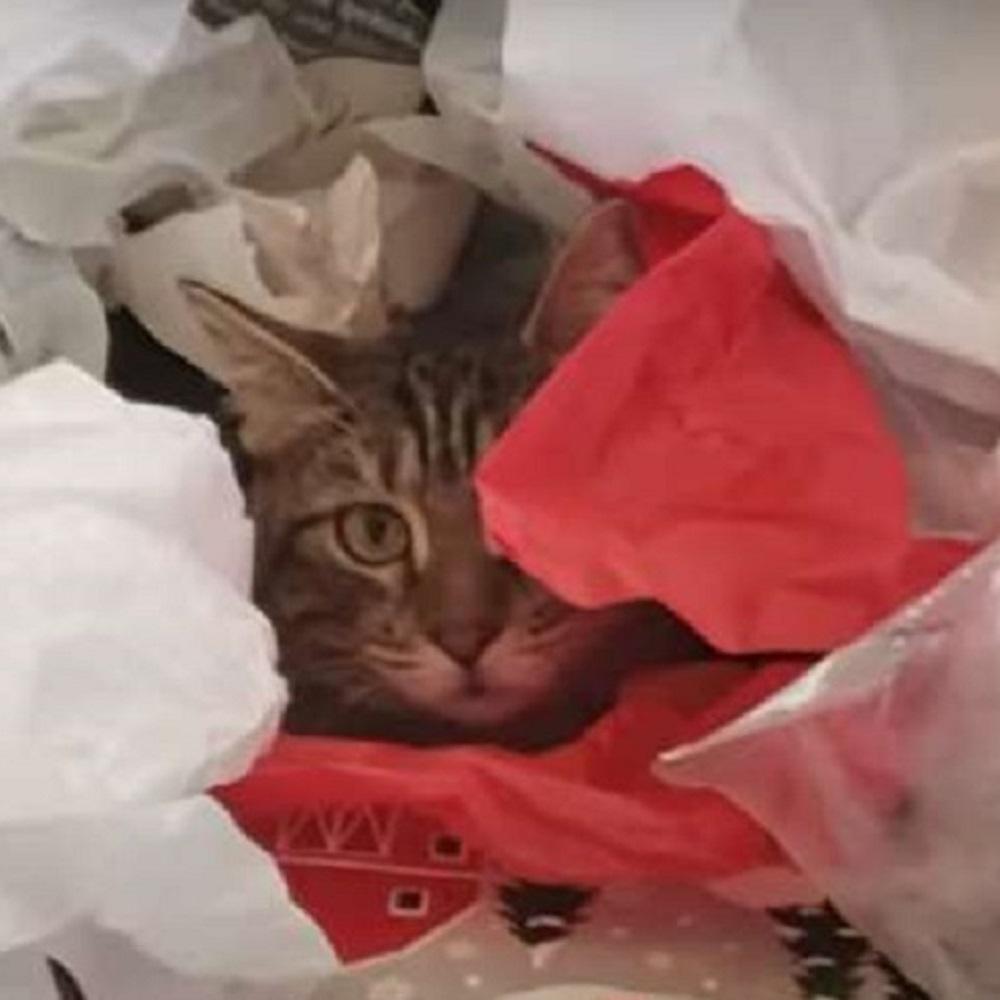 amelia gattina rinata dopo cure