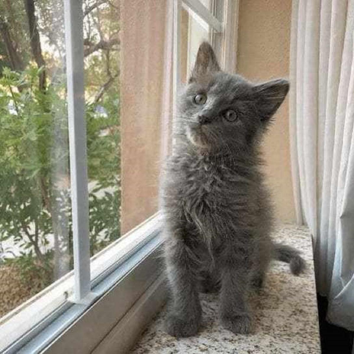 bert gattino felice per adozione