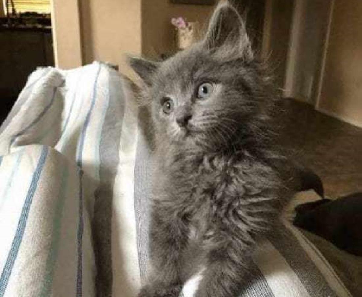 bert gatto cure rifugio