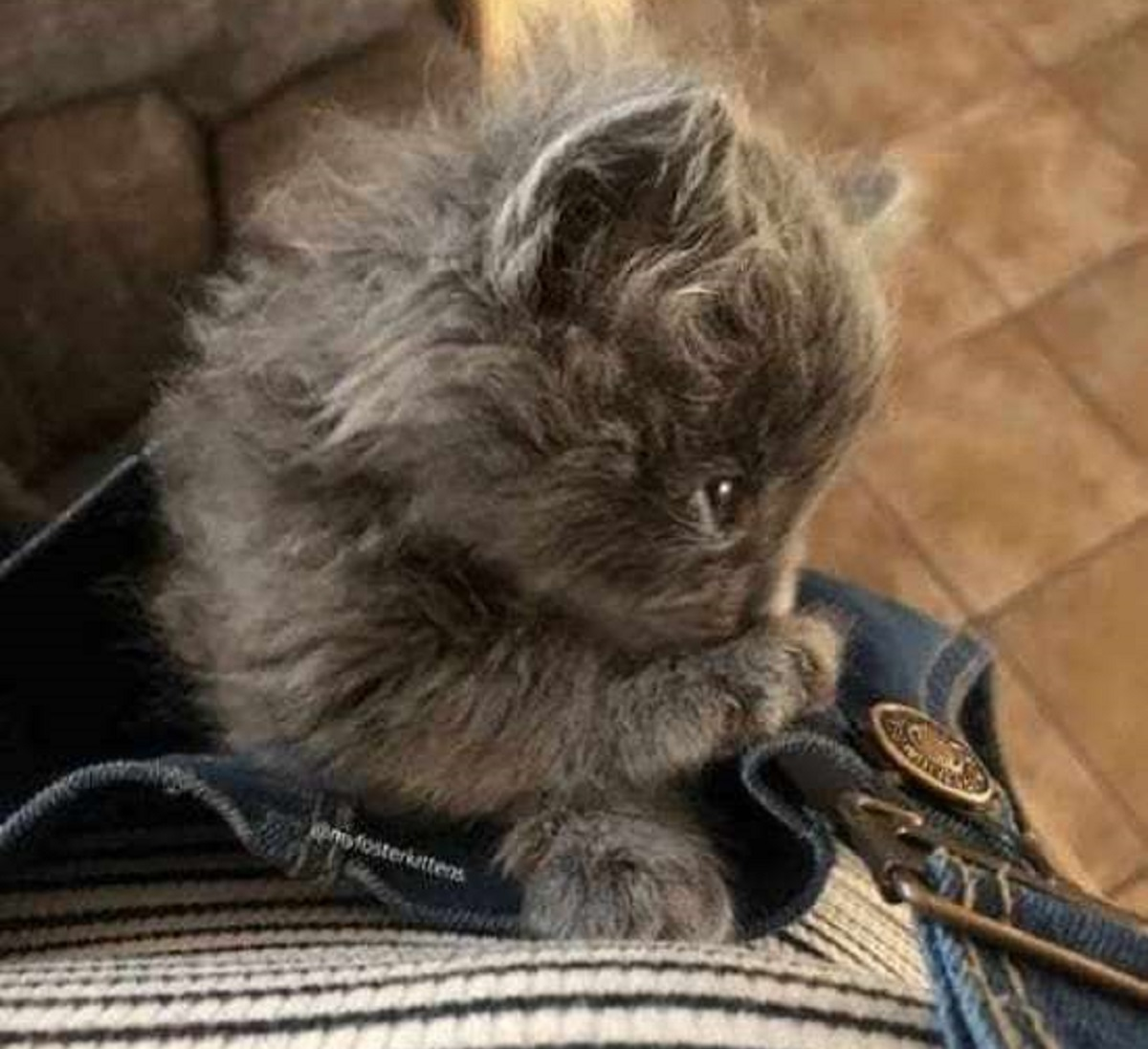 bert gatto salvato strade affollate