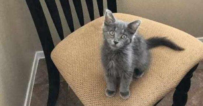 bert gattino salvato che ora vive con fratelli meravigliosi