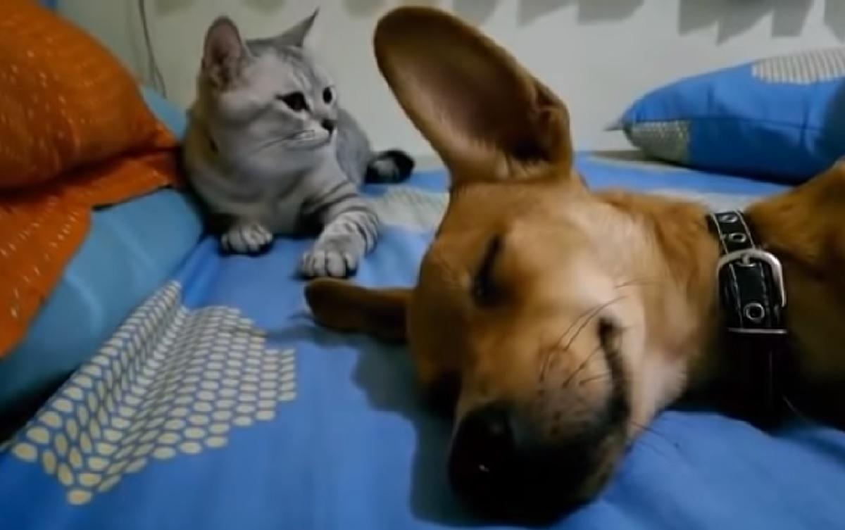 betty gatta cane sta dormendo