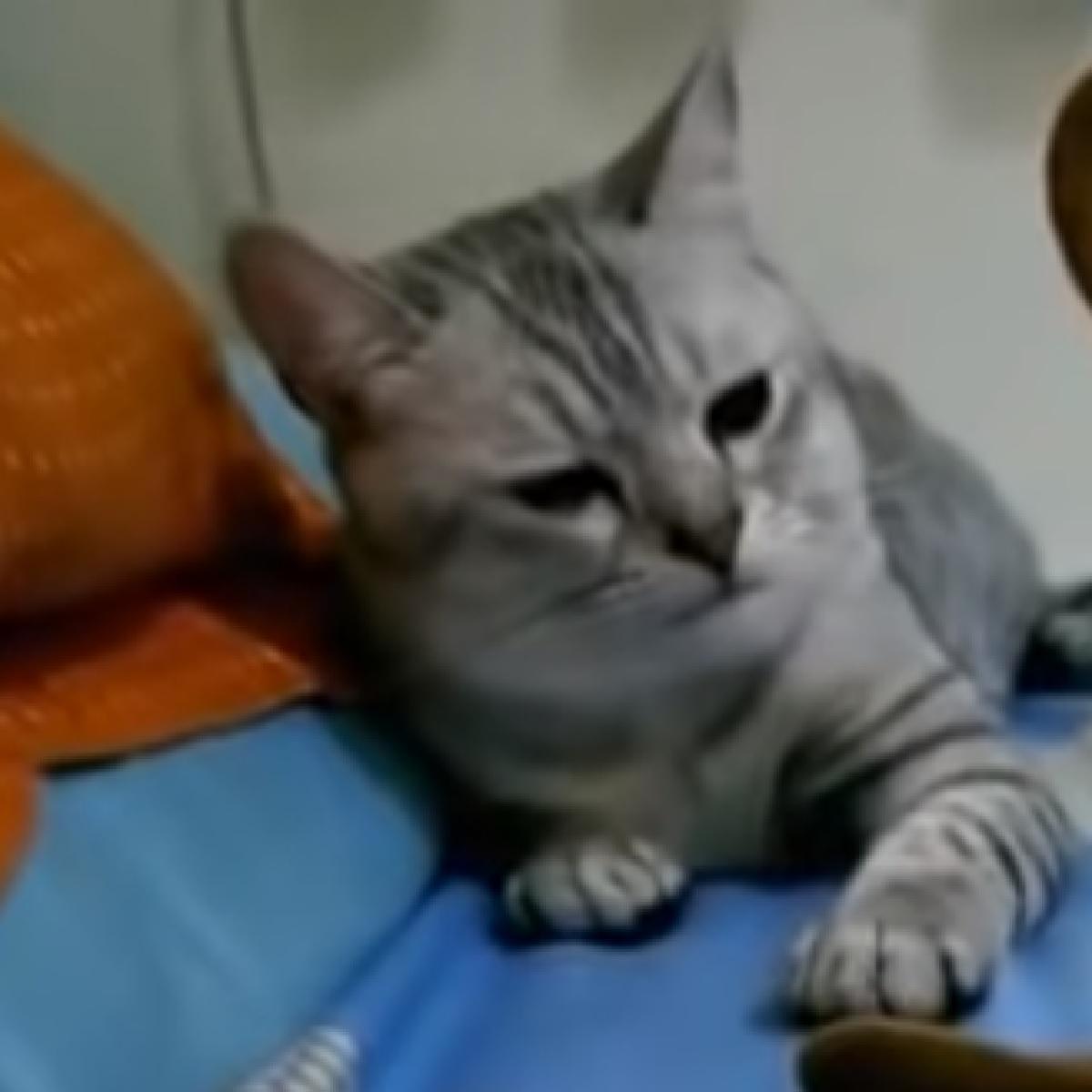 betty gatta ragiona su azione