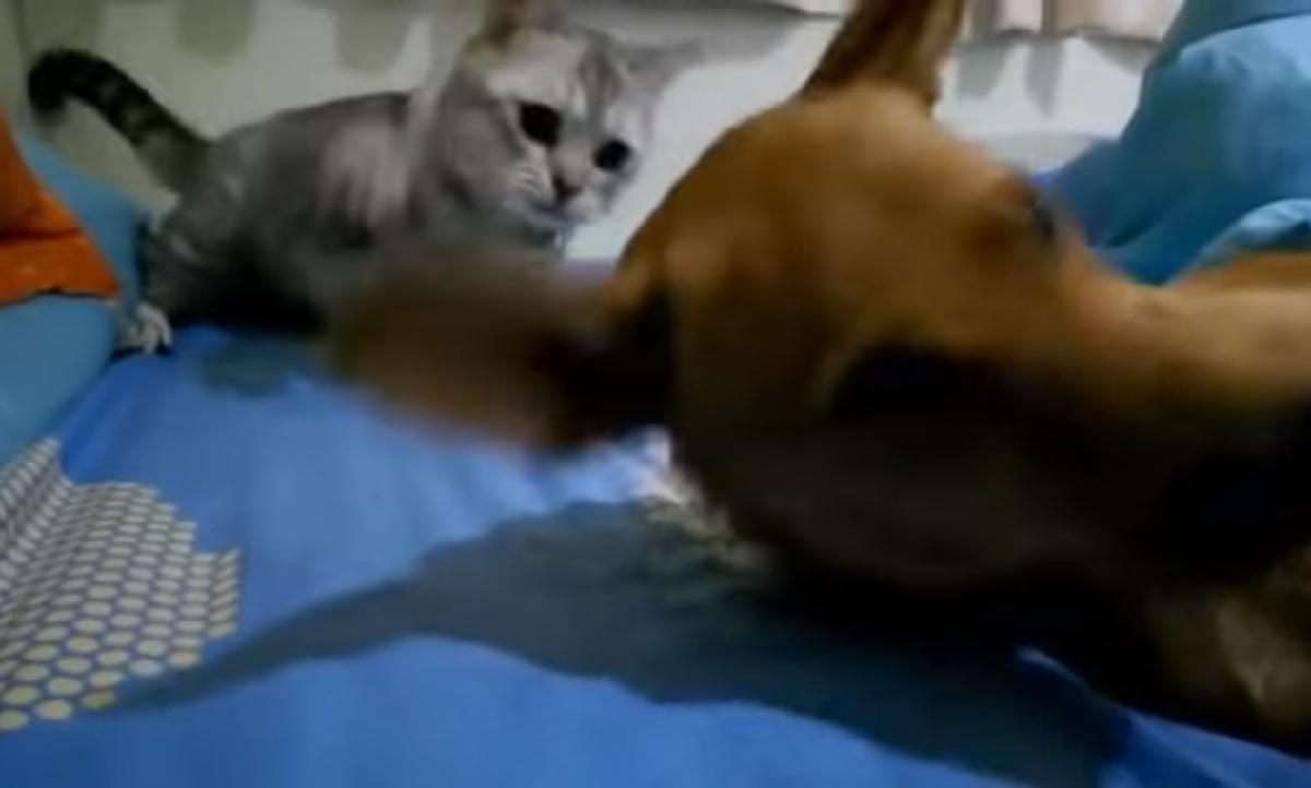 betty gattina agisce con colpo