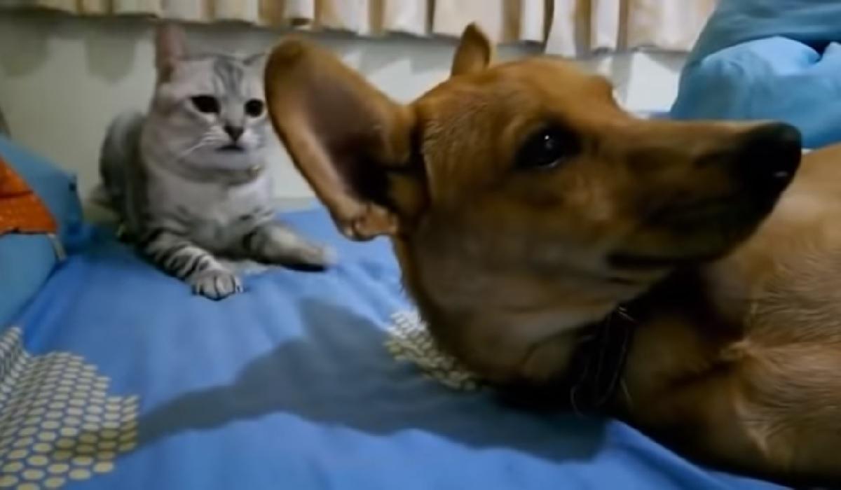 betty gattina non raggiunge obbiettivo
