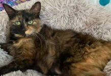 caki gatta incinta salvata da una bambina