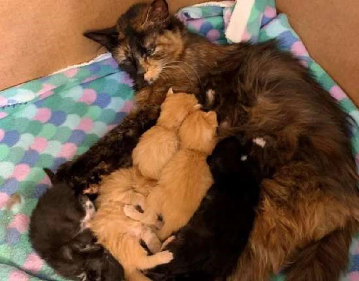 caki gattina partorisce piccoletti