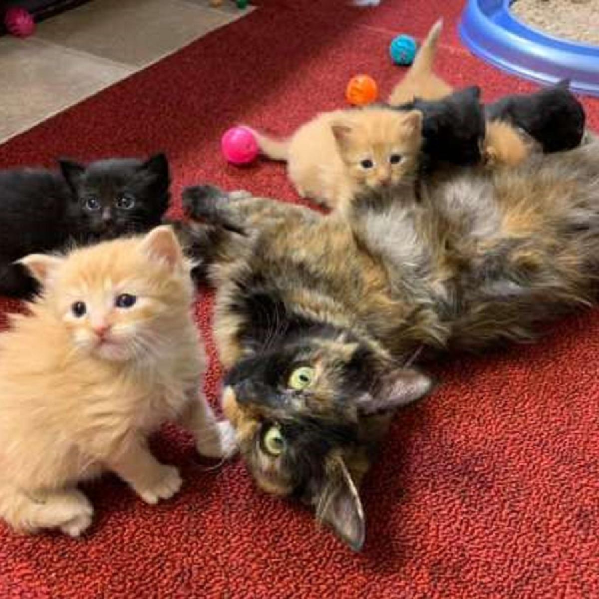 caki gatta da alla luce meravigliosi gattini