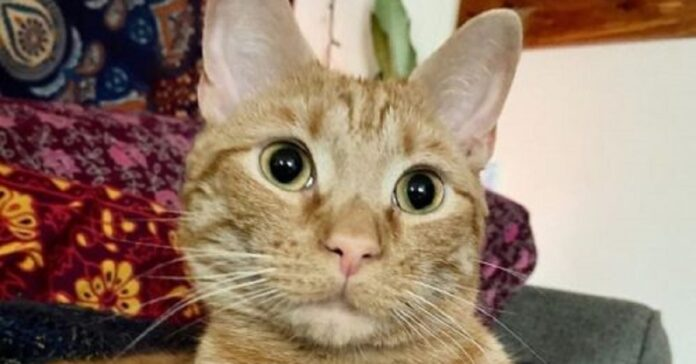 carrot gattino frigo