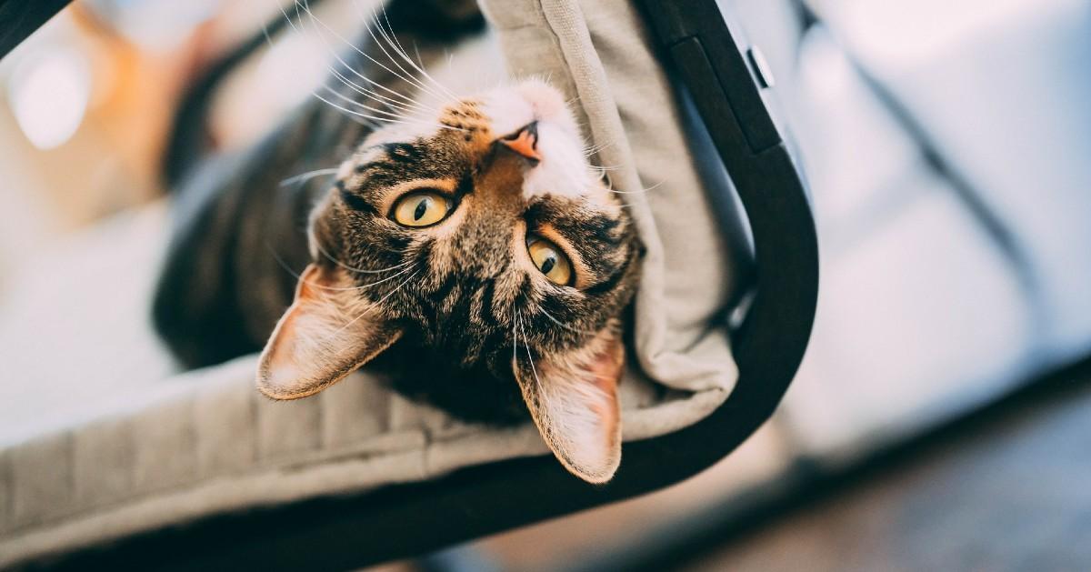 gattino appiccicoso
