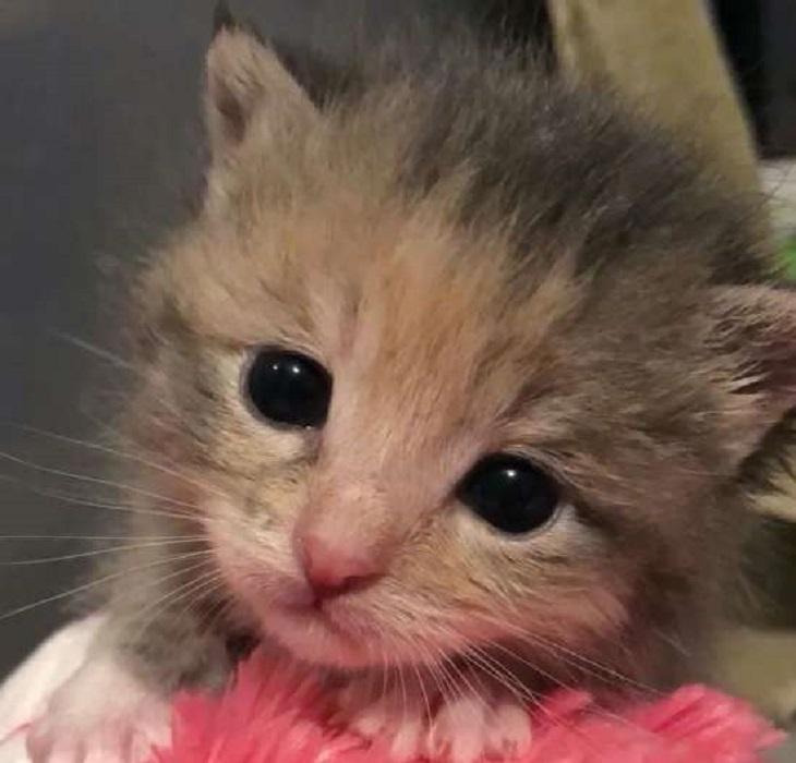 chickpea gattina salvataggio alley cat