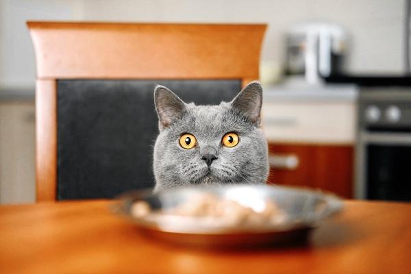 gatto e cibo umido
