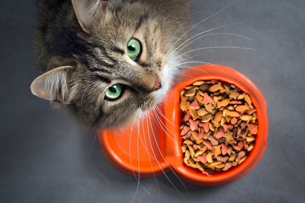 gatto e crocchette