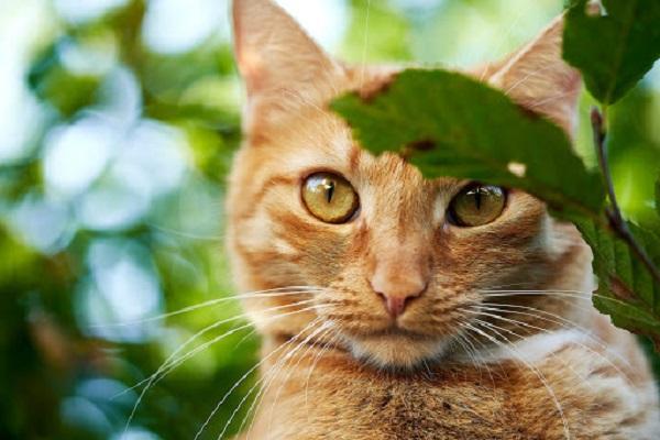 gatto rosso in giardino