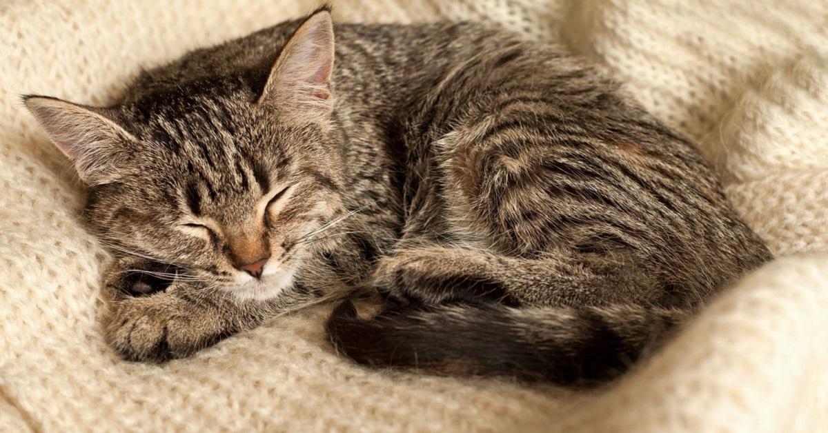 gatto su coperta di lana