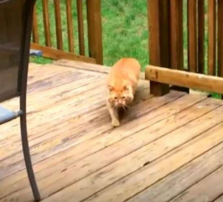 cinnabon gattino amore proprietario