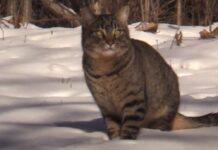 clarence midnight due gattini salvati dalla neve