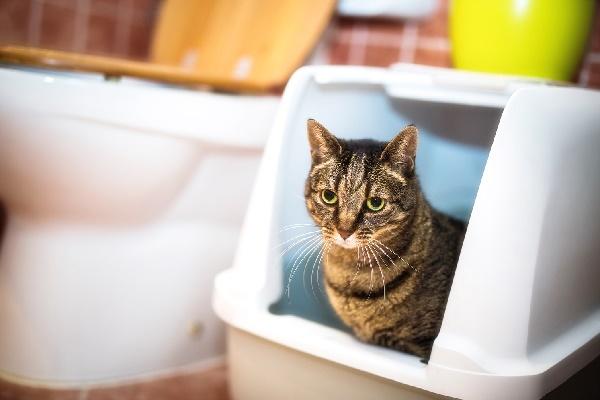 lettiera da interni per gatti