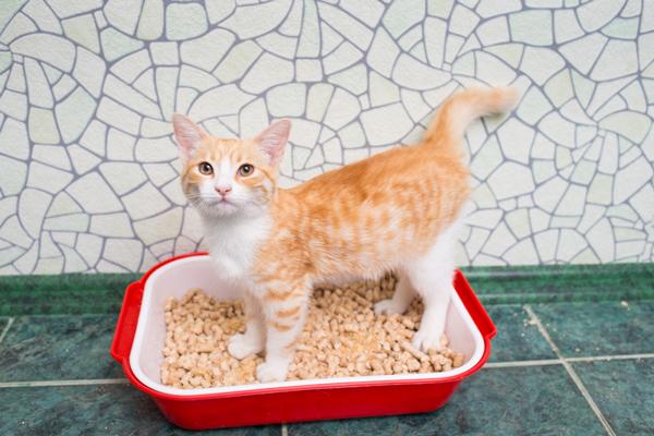 lettiera per gattini piccoli