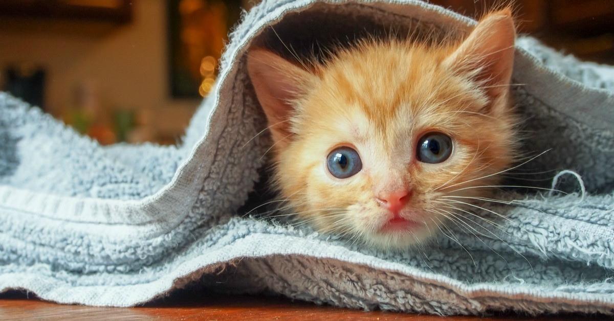 come capire se il gattino ha i vermi