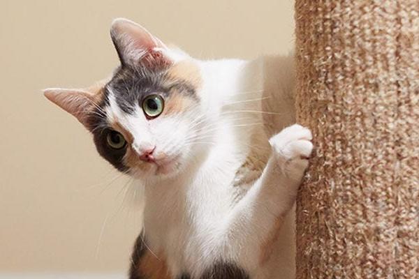 gatto che gioca col tiragraffi