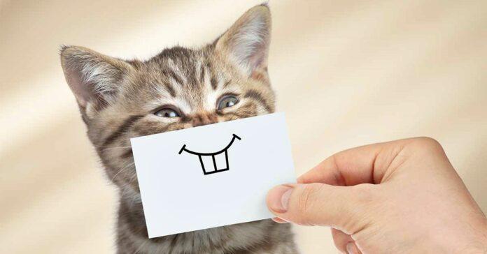 gattino buffo